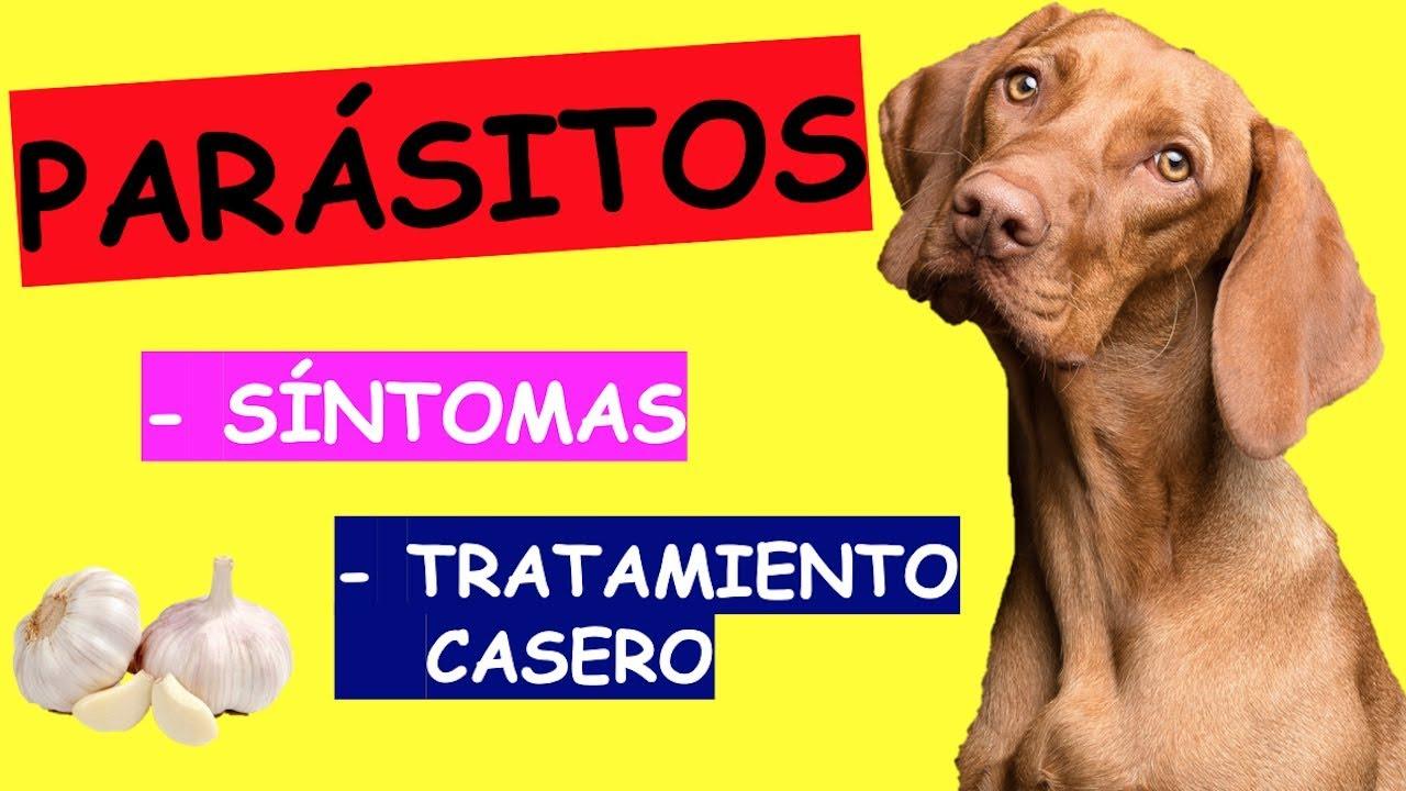 Tratamiento de oxiuros en perros - divastudio.ro