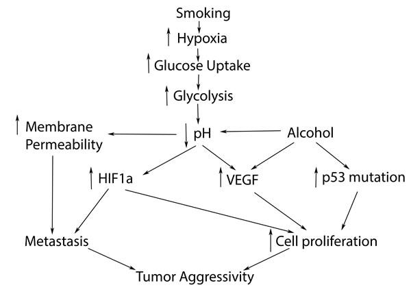cancer colonma faza)