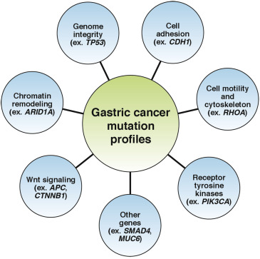 Gastric cancer kras mutation, Posts navigation