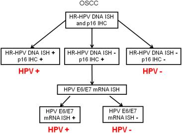 human papillomavirus e6/ e7 mrna)