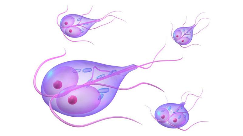 simptomele giardiei după antibiotice