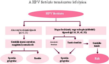 hpv teszt ferfiaknal)