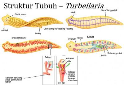 ductal papilloma nipple papiloma hirsutoide sintomas