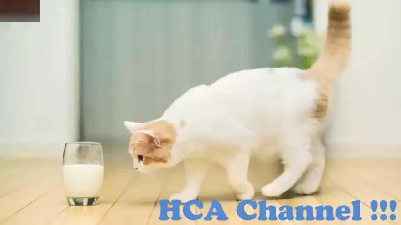 Oxiuros en gatos sintomas - divastudio.ro