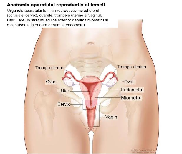 Cancer ovarian - cauze si factori de risc, simptome, diagnostic si tratament