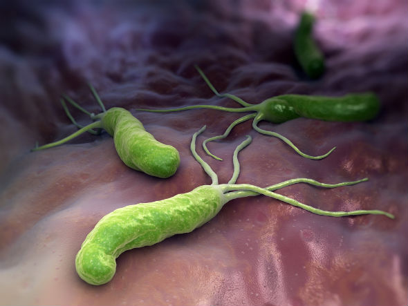 bacterie helicobacter pylori