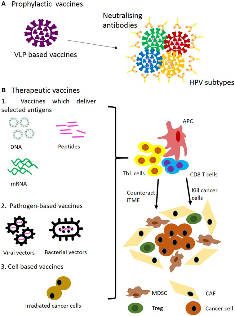 hpv vaccine and oropharyngeal cancer