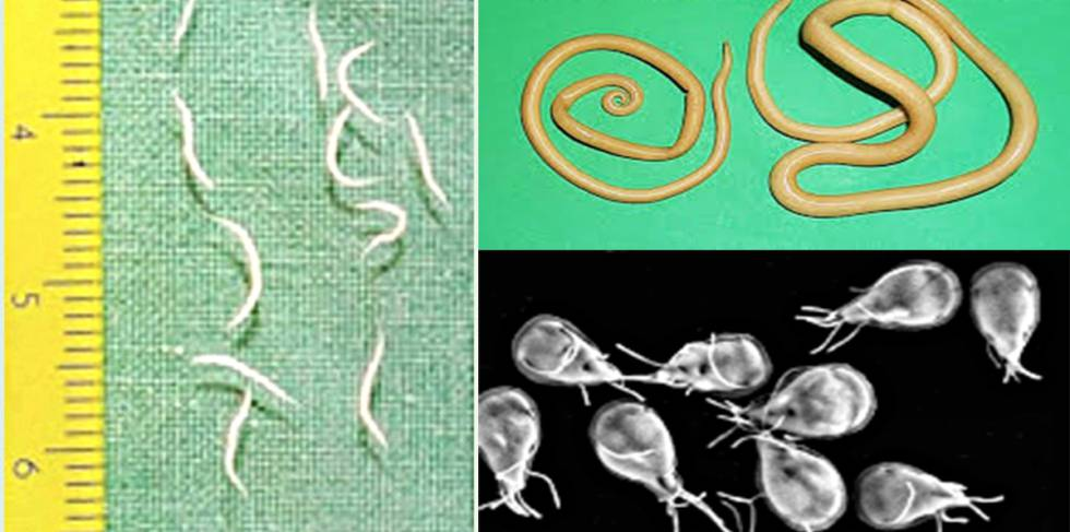 infeccion por oxiuros ninos intraductal papilloma birads 4