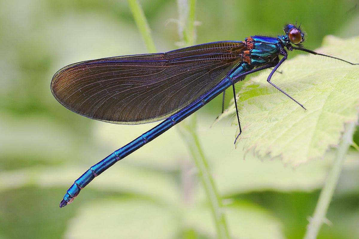 clasifică nemathelminthes hewan)