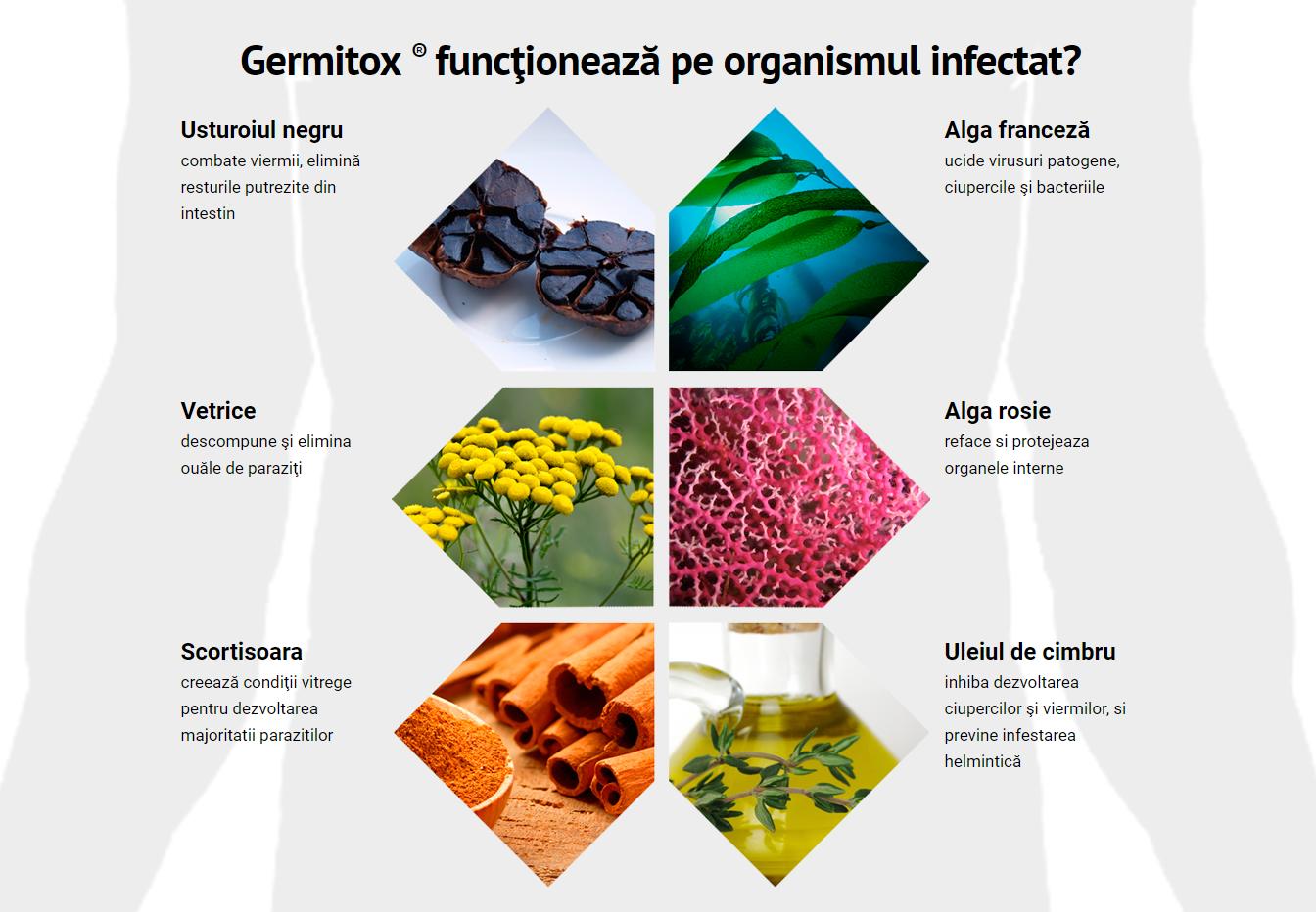 sistemul digestiv pdf