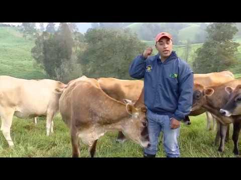 medicament antiparazitar cu spectru extins papilomatosis o verruga bovina