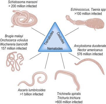 helminths infections who