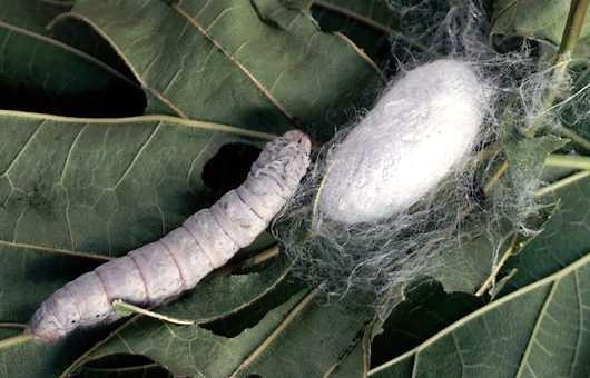 viermi de mărime în corpul uman