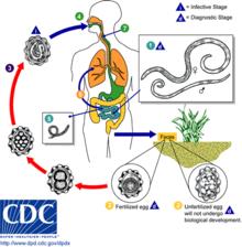 helminth parasitic infection)