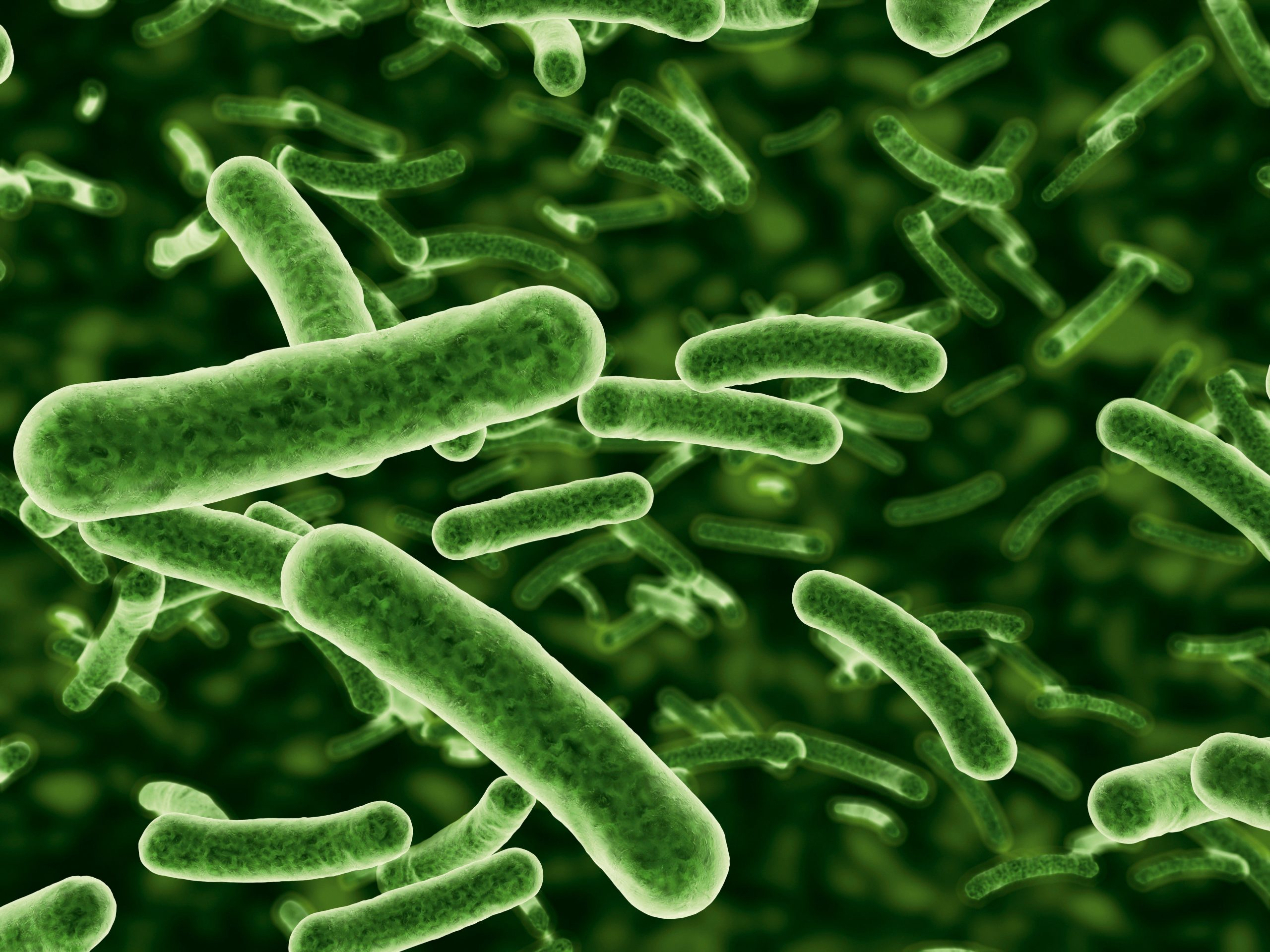 bacterii patogene)