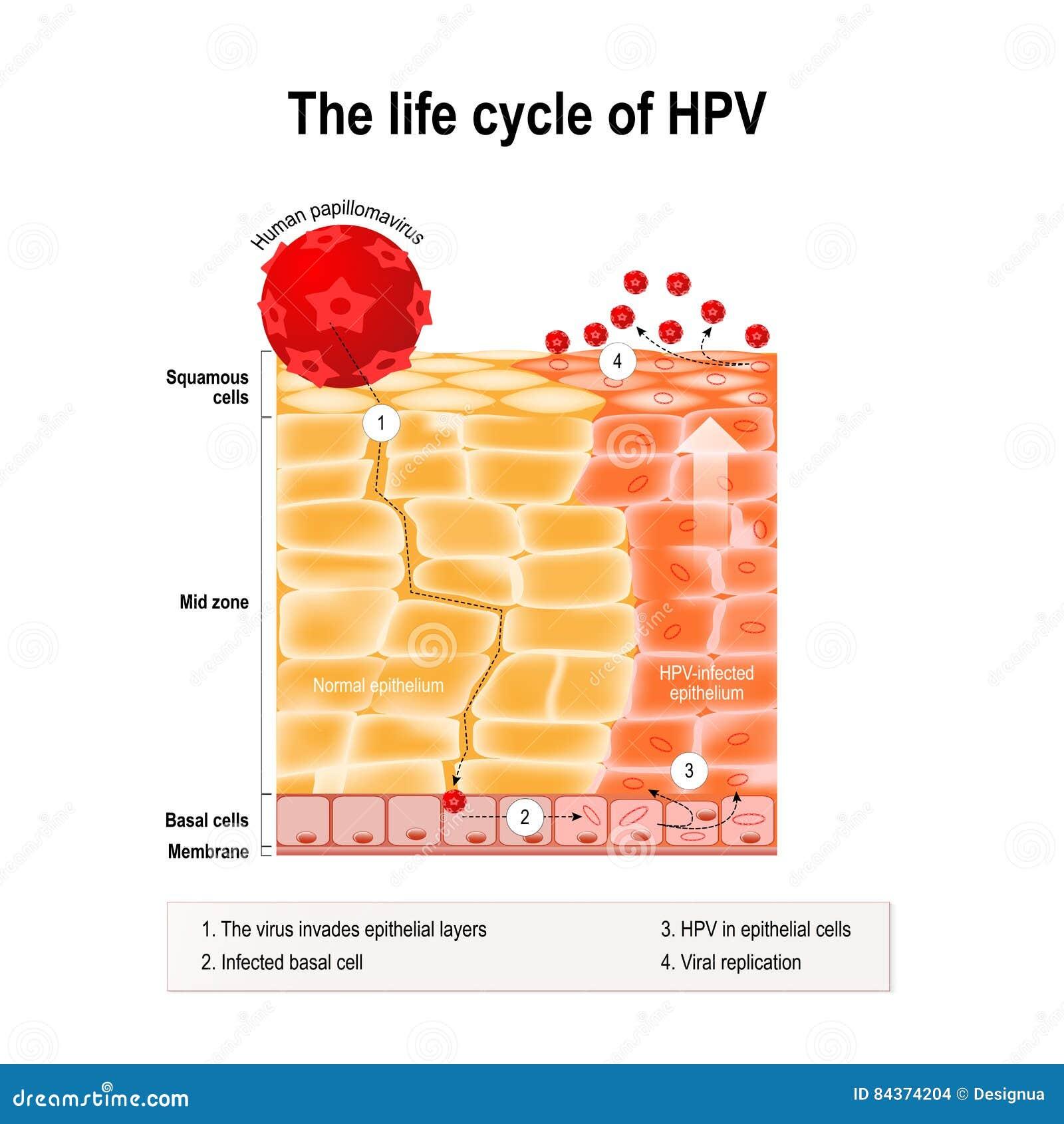 Hpv human papillomavirus symptoms Infectia cu HPV (Human Papilloma Virus)