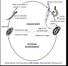 enterobiasis symptomen