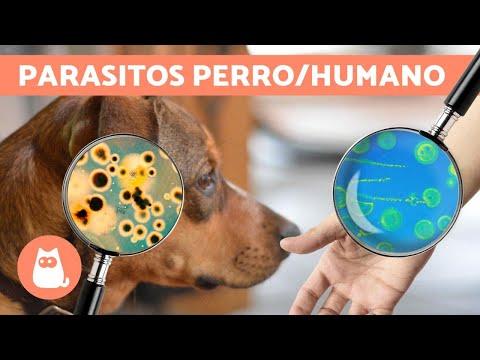 papiloma en perros en la boca tratamiento papillomavirus qka eshte