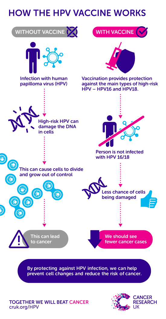 high risk hpv no cancer