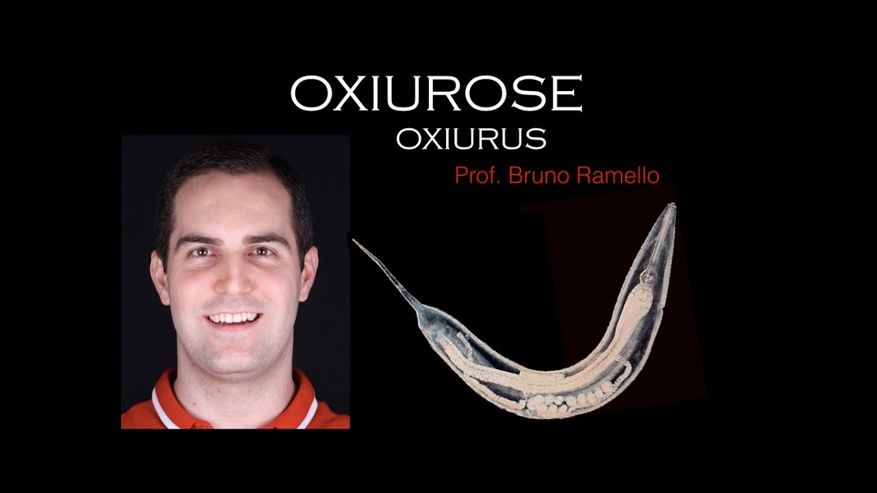 Qual tratamento para oxiurus