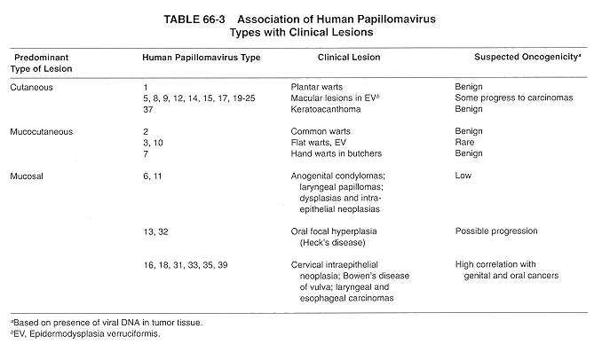 hpv warts strains modificări evolutive ale platyhelminthes