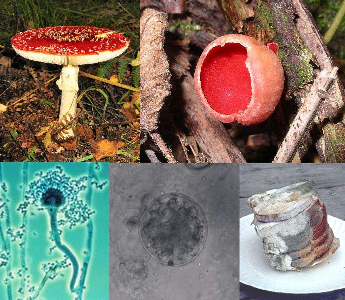 ciuperci bacterii viruși paraziți)