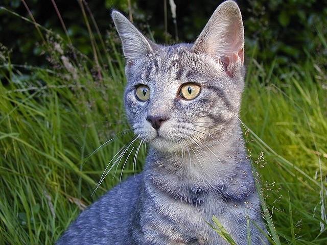 terapia giardia nel gatto
