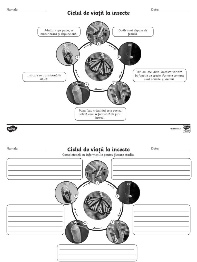 ciclul de dezvoltare al viermilor