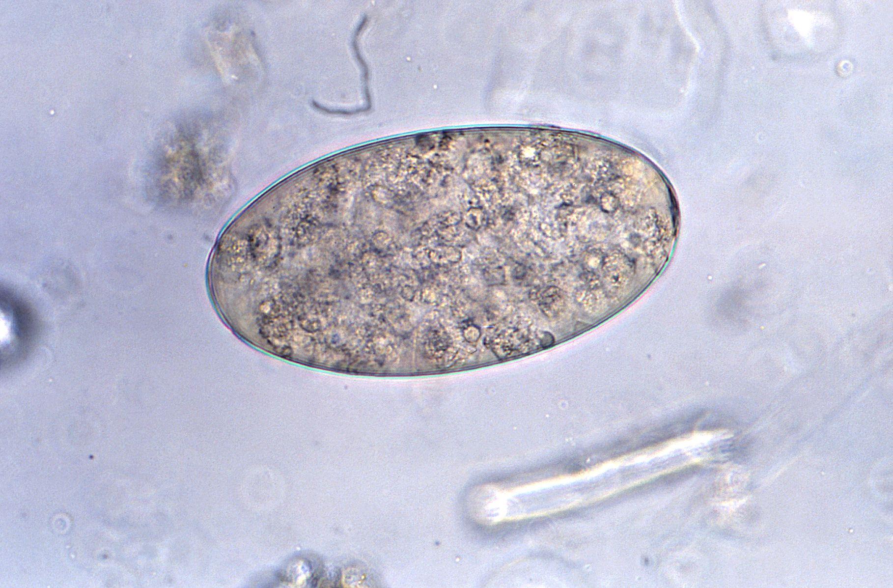 papilloma virus cancro gola
