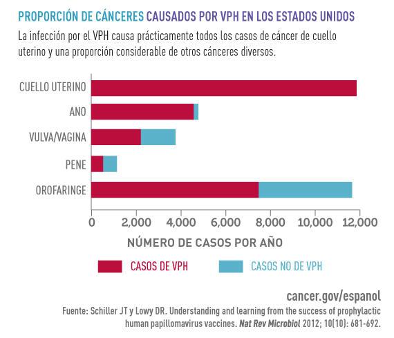 Papiloma y cancer - divastudio.ro