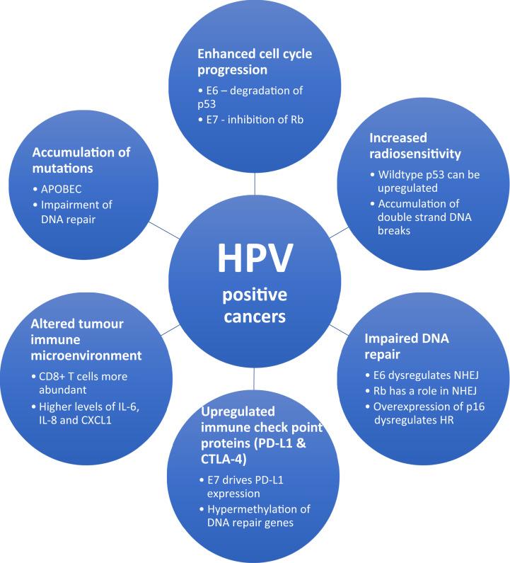 human papillomavirus hpv meaning