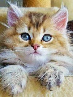 giardia gatos umani