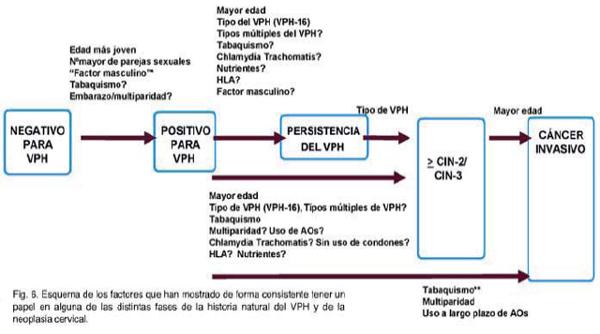 virus del papiloma fases)