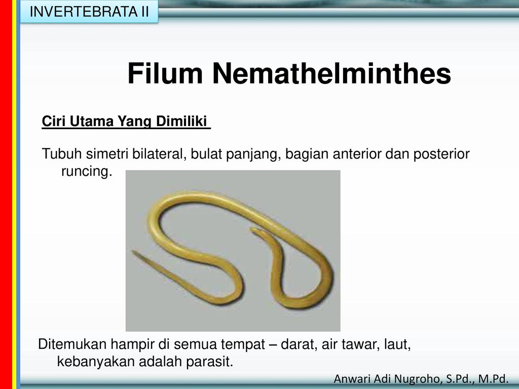 nemathelminthes biologi)