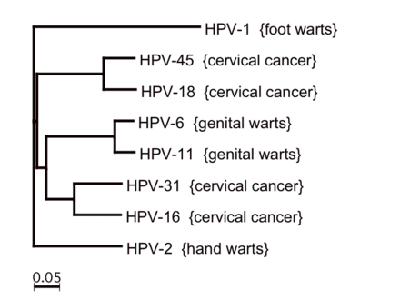 can hpv type 16 cause genital warts)