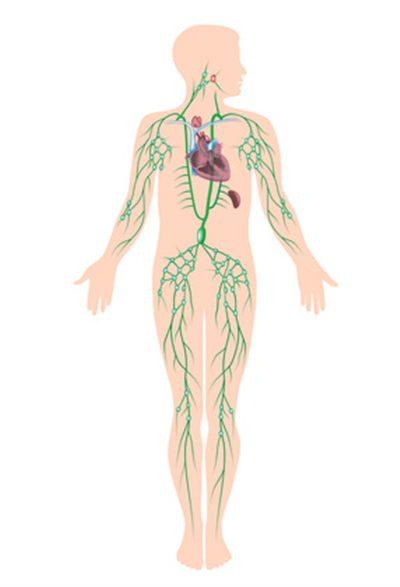 cancer de hodgkin symptomes)