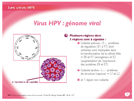 Papillomavirus humain symptomes chez lhomme