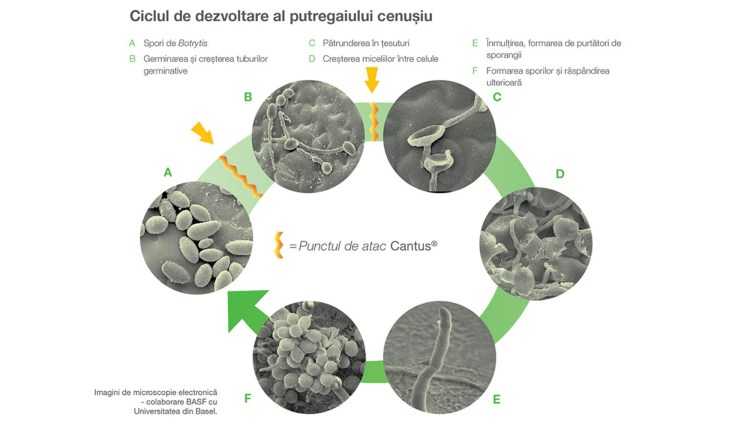 ciclul de dezvoltare a lanțului pancreatic cancer peritoneal washings