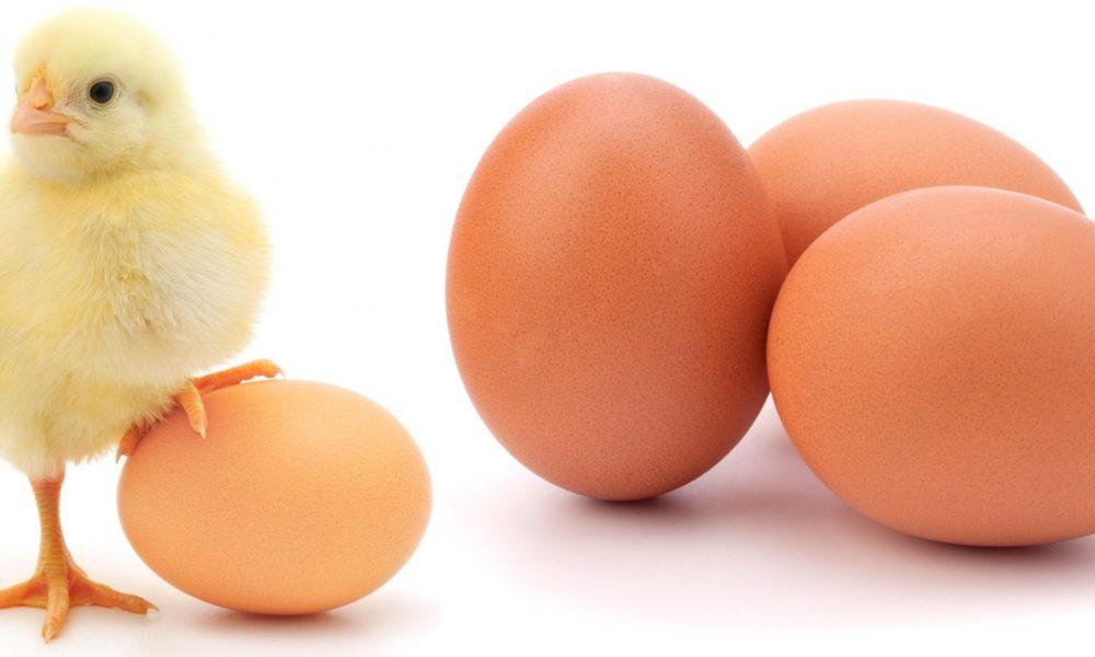 câte ouă de helmint trăiesc)
