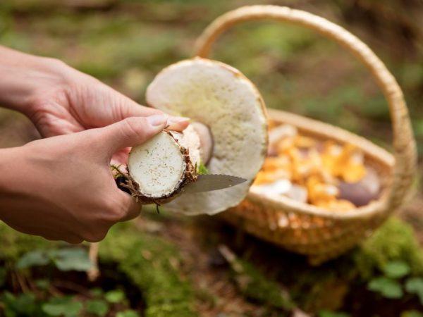 curățarea corpului de ciuperci și viermi)