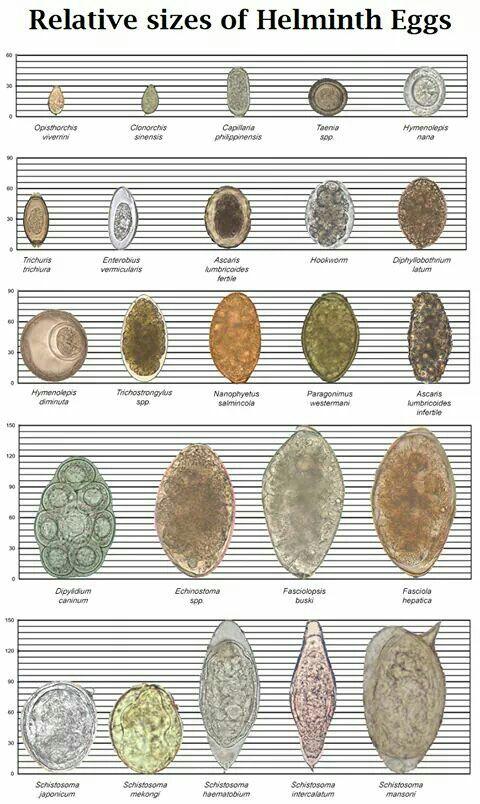 helminth eggs)
