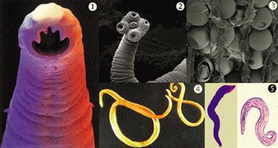 tablete cu parazit