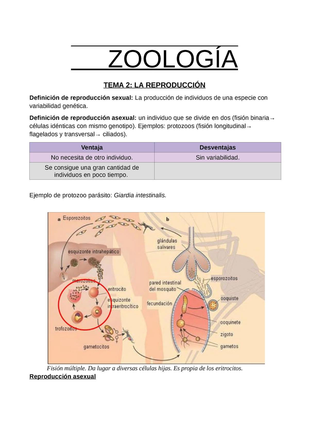 Que causa el oxiuros, Inverted papilloma nose ct