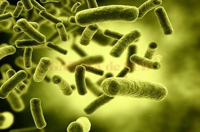 Bacterie | divastudio.ro