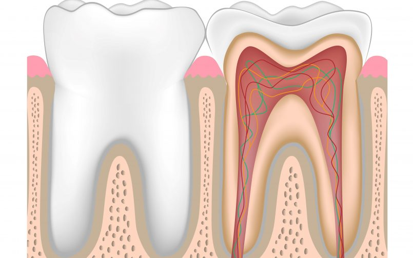 măcinarea dinților și paraziți)