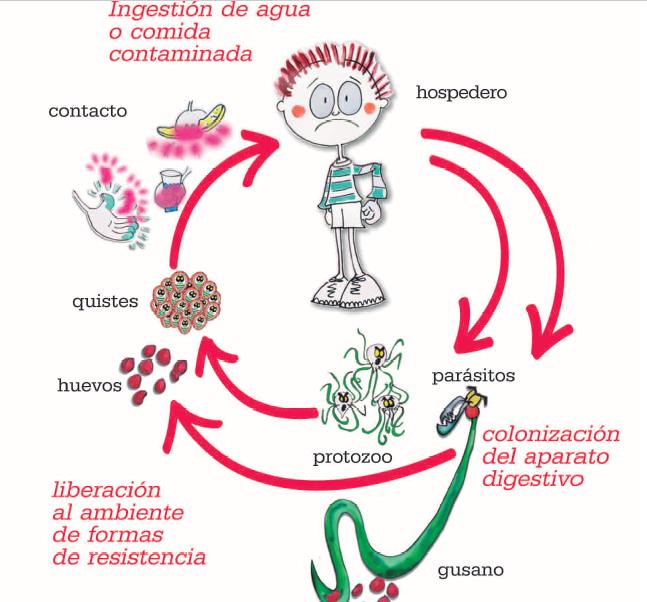 oxiuros hinchazon simptome cancer noduli