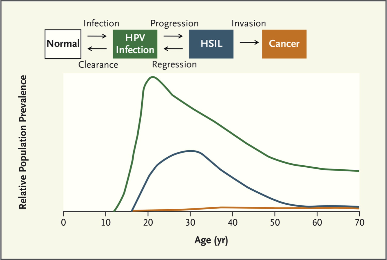 genital hpv infection cancer)