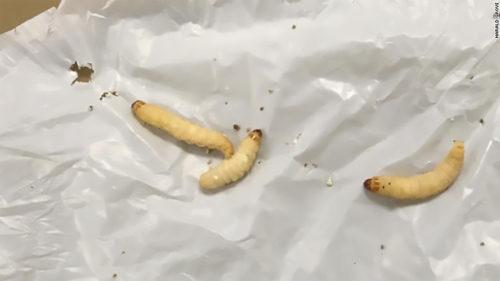 Ce se întâmplă dacă mâncăm cireșe cu viermi? Cirese cu viermi