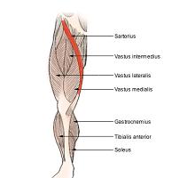 douleur jambe toxine