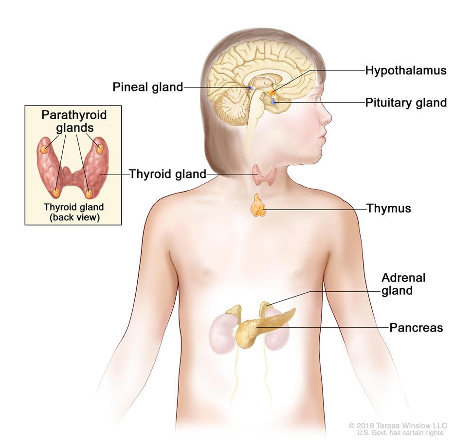 endocrine cancer types)